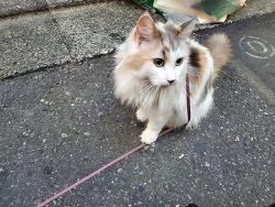우리동네 산책나온 고양이