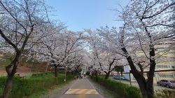 [20210404]안양군포의왕시 관내에 숨어있는  벚꽃 명소