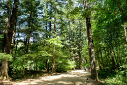 5월 국내 여행지 추천, 피톤치드 가득한 걷기 좋은 길 숲길 산책로
