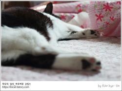 [적묘의 고양이]추석연휴,고양이 떡실신,노묘,할묘니,홈가드닝,이시국 취미생활,추석 전날 달,한가위,캣닙