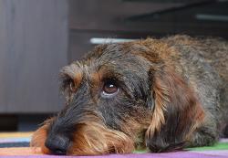 반려동물 문제 행동 해결을 위한 3가지 규칙
