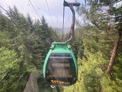 트리오브미스테리(Trees of Mystery) 2부, 스카이트레일(SkyTrail) 곤돌라와 재미있는 나무조각들 구경