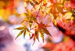 가을엔 단풍놀이! 인생샷 국내 단풍 명소 시기 추천 7곳+