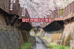 이름도 예쁜 마산 문화동 연애다리, 소하천 벚꽃 터널