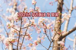 너무 예쁜 봄이다. 2021년 첫 벚꽃을 만났다