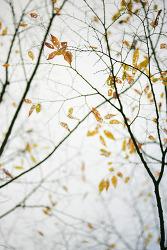 헐벗은 나무의 아름다움