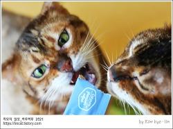 [적묘의 고양이]친구님네 3종세트,간식주세요,배고파요,거짓말쟁이들,뱅갈,먼치킨
