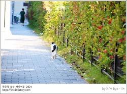 [적묘의 고양이]길냥이, 한가위 연휴, 한가로운 거리, 한가로운 고양이, 망원렌즈 산 나, 칭찬해