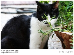 [적묘의 고양이]가을장마,풀뜯는 할묘니,정원나오기 힘들어요,노묘,16살고양이,가을비