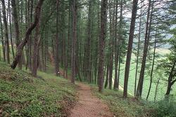 강원도여행 옇월 한반도 생태공원 친환경 전기카트 체험장 산책로
