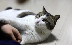 고양이의 날은 언제가 맞는 걸까?