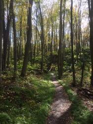 [1500 칼럼] 브루스 트레일( Bruce trail) 예찬