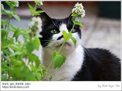 [적묘의 고양이]디자인이 문제, 타고난 털코트, 각도로 승부하는 미묘,할묘니, 노묘의 사진빨,얼짱고양이,16살 고양이