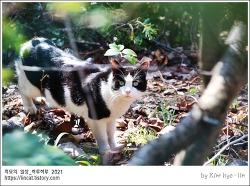 [적묘의 고양이]직박구리 폴더 해제,벚꽃개화,목련만개,봄날 고양이도 등장,일상적인 일상