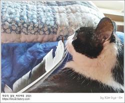 [적묘의 고양이]할묘니와 까치 깃털,17살 노묘,학교 젖소, 고양이 골뱅이