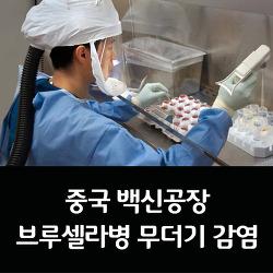 중국 백신공장 브루셀라병, 무더기 감염
