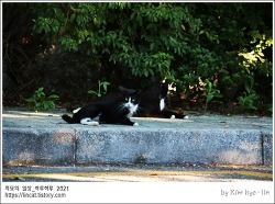 [적묘의 고양이]신선대, 고양이, 거리두기, 도망가지 않고, 다가가지 않고, 보살핌 받는 동네고양이