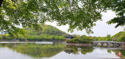 유채꽃 명소 두류공원 & 성당못 (산딸나무)