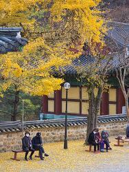 가을 대원사 풍경