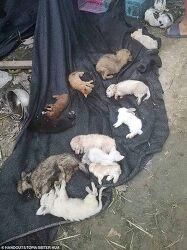 중국 물류창고 상자에 담겨 죽은 반려 동물 4천마리 발견