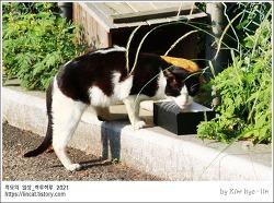 [적묘의 고양이]학교 고양이, 학교생활이 즐거운 이유, 젖소고양이,캣맘