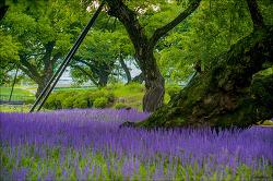성주 성밖숲