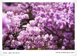 [2019년 4월 7일] 부천 원미산 진달래 축제