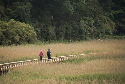 전남 보성여행 문학기행 일번지 천상갯벌이 숨쉬는 중도방죽 벌교생태공원
