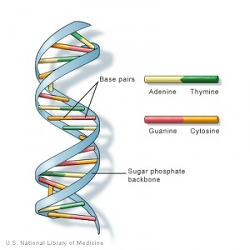 DNA, RNA and Proteins(번역요함)