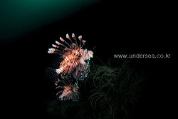Dive Moal Boal with MB Ocean Blue, Philippines