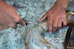 바다낚시로 직접 잡아 회를 썰면 사랑받는 생선회 종류(상편)