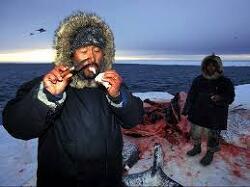 [부동산 투기]에스키모에게 고래고기를 먹지 말라고 하면?