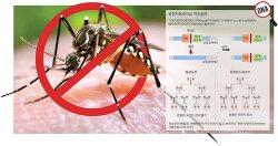 [중앙SUNDAY 김은기의 '바이오 토크']<99>말라리아모기, 불임유전자 지닌 '내시모기' 퍼트려 없앤다