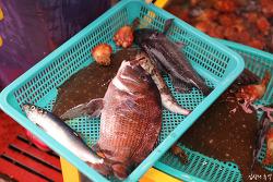 임산부가 생선회를 먹으면 어떻게 될까?
