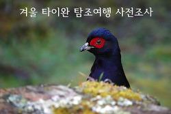 겨울 타이완 탐조여행 사전조사