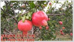고흥석류농원에서 석류즙/석류원액 판매합니다! 영양만점 석류즙/석류원액 건강하게 즐겨보세요
