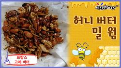 달콤한 술 안주 - 허니 버터 밀웜 (Honey Butter Mealworm)
