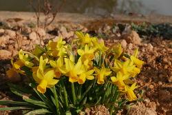 봄이 무르익는 능가사
