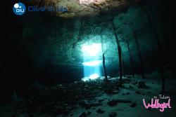 뚤룸한달살기/ 20190708 도스 오호스 Dos Ojos cenote 다이빙