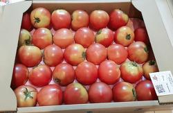 농가직송 토마토 택배
