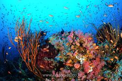 Dive Sabang Beach, Philippines