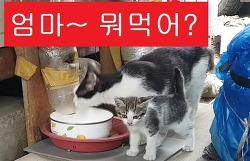[고양이]엄마~ 뭐먹어?