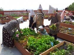 *가든프로젝트, '2020 도시농업 트렌드' 발표