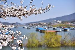 벚꽃핀 초평호수