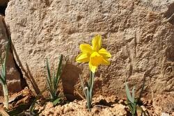 능가사 봄 풍경