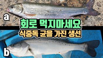 농어로 둔갑되는 생선, 치명적인 식중독 균까지(동해 여행시 주의하세요)
