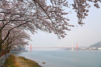 아름다운 남해 왕지벚꽃길  드라이브! (남해여행/남해벚꽃명소)