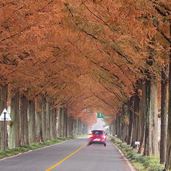교통사고 가장 많은 달이 10~11월? 가을 나들이 안전운전 팁