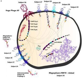생물과 무생물 간격 메우는 바이러스