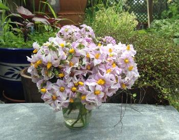 마음의 웃음:채소꽃